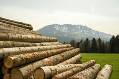 Pile of logs near hiking trail in Entlebuch biosphere reserve. Switzerland royalty free stock images
