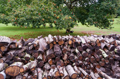 Pile of logs in an orchard. Pile of fire wood in a orchard against chestnut tree on a background Stock Images