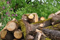 Pile of logs. With moss Stock Images