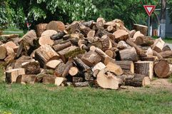 Pile of logs. With moss Stock Photo