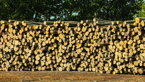 Pile of logs at the port ready for loading to ships Royalty Free Stock Photography