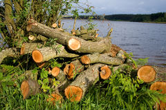 Pile of logs by river. Scenic view of pile of chopped logs by river in countryside Stock Photos