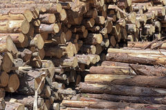 Pile of logs in sawmill. MONTE VERDE, MG, BRAZIL - Logs stacked for processing in sawmill Stock Photo