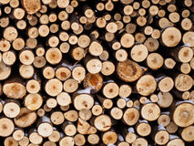 Pile of logs Stock Photography