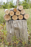Pile of logs on stumpy. The cut and chopped logs stack on stumpy Royalty Free Stock Photo