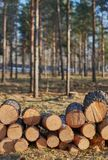 Logs in the sun. A pile of logs in the sun royalty free stock images