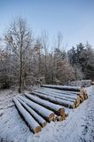 Pile of logs under snow Stock Image