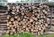 Pile of logs for wood texture background Stock Photos