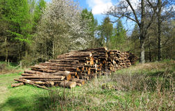 A Pile of Logs on a woodland Clearing Royalty Free Stock Images