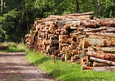 A Pile of Logs on a woodland track Royalty Free Stock Photos