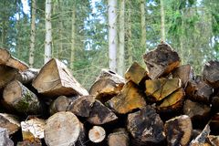 A pile of logs. Stock Photography