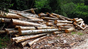 Pile of logs in woods Royalty Free Stock Images