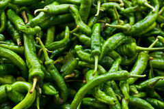 Pile of Longhorn Peppers Royalty Free Stock Image
