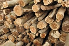 Pile of lumber Stock Image