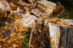 Pile of Lumber Stock Photo