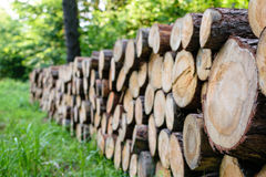Pile of lumber in the forest Royalty Free Stock Image