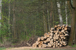 Pile of lumber in forest Royalty Free Stock Image