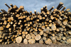 Pile of lumber on the lumberyard in spring Stock Photo