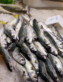 Pile of mackerel Royalty Free Stock Images