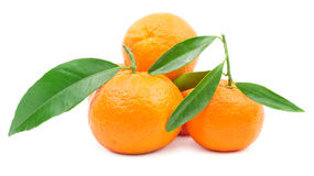 Pile of mandarins with leaf isolated on white Royalty Free Stock Images