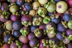 A pile of mangosteen Royalty Free Stock Photos
