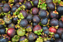 Pile of mangosteen Stock Images