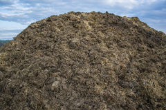 Pile of manure in the countryside with blue sky. Heap of dung in field on the farm yard with village in background. Traditional rural scene. Slovak landscape Stock Photography
