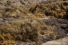 Pile of manure in the countryside. Heap of dung on the farm yard Royalty Free Stock Photography