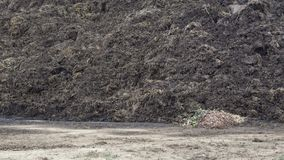 Pile of manure in the countryside. Heap of dung in field on the farm. Fertilizer from cow manure and straw. stock video