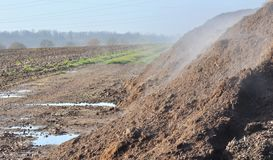 Pile of manure deposited in a field Royalty Free Stock Images
