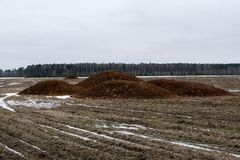 A pile of manure taken out on the field. Organic fertilizers are introduced on the field in the spring royalty free stock images