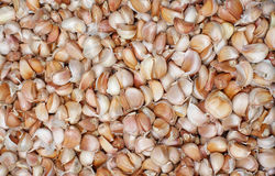 Pile of many fresh garlic cloves in the farmers market for sale from field for background. Close up. Pile of many white fresh garlic in the farmers market for Stock Photo
