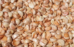 Pile of many fresh garlic cloves in the farmers market for sale from field for background. Close up. Pile of many white fresh garlic in the farmers market for Royalty Free Stock Images
