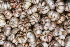 Pile of many fresh garlic in the farmers market for sale from field for background. Close up. Pile of many white fresh garlic in the farmers market for sale from Stock Photo