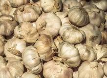 Pile of many fresh garlic in the farmers market for sale from field for background. Close up. Pile of many white fresh garlic in the farmers market for sale from Stock Photos