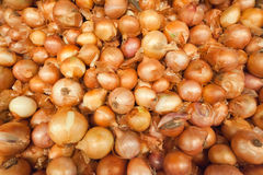 Pile of many onions in a shop Royalty Free Stock Images