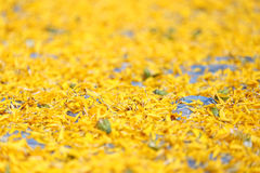Pile of marigold petals Stock Images