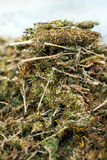 Pile of marihuana Royalty Free Stock Images