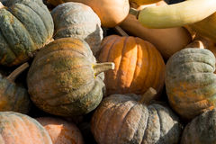 Pile of mouldy rotting pumpkins and butternut squash Royalty Free Stock Photo