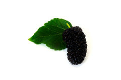 A pile of Mulberry with leaf Isolated on white background blackberry. A pile of Mulberry with leaf Isolated on white background. blackberry Stock Images