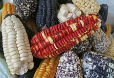 Pile of multi-color Peruvian corns for sale in the local market of Cusco, Peru royalty free stock image