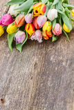 Pile  of multicolored  tulips Royalty Free Stock Photos