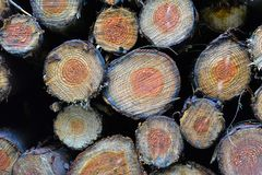 Pile of multiple sawn off wood tree logs with year growth rings stock photo