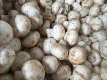 A pile of mushroom Royalty Free Stock Photo