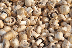 Pile of mushrooms. Pile of champignons on counter Stock Photo