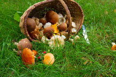 Pile of mushrooms Royalty Free Stock Photography