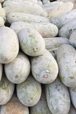 Pile of muskmelon Stock Photography
