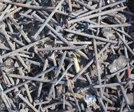 Pile of nails Stock Images