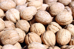 Pile of natural walnuts Royalty Free Stock Photography