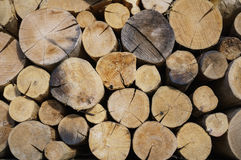 Pile of natural wooden logs Stock Image